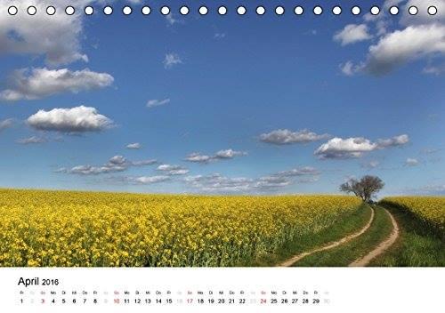 Kalender Usedomfotos 2016 - Rapsfeld bei Mellenthin