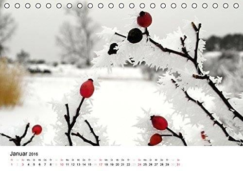 Kalender Usedomfotos 2016 - auf dem Gnitz