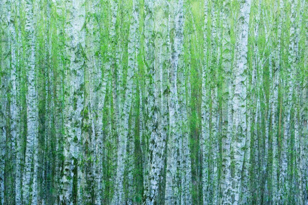 bartocha_enchanting_trees klein
